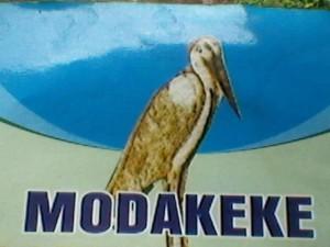 akoraye bird