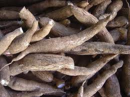 cassava Business