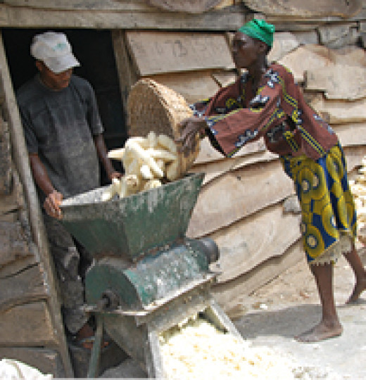 grinding dried cassava 520x540 Gallery
