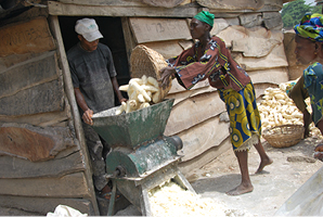 grinding dried cassava Business