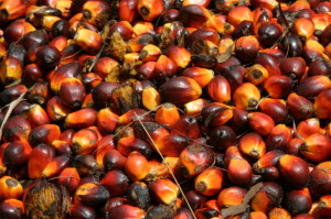 palm kernel 300x199 Business